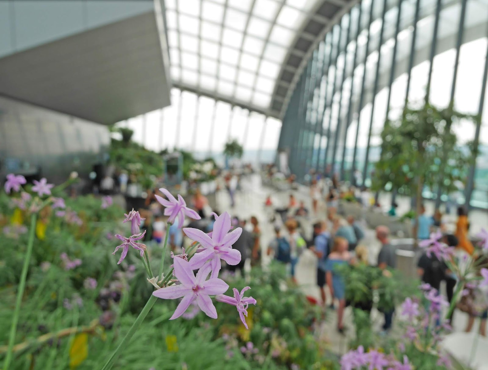 Flowers at the Sky Garden in London